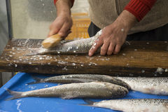 A Fisherman Removing the Fish Scales Royalty Free Stock Photography