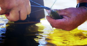 Fisherman removing hook from trout. Close-up of fisherman removing hook from trout stock footage
