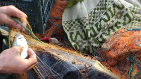 Fisherman Repairs Fishnets stock footage