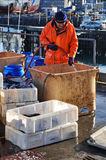 Fisherman in Reykjavik harbor, Iceland Stock Photography