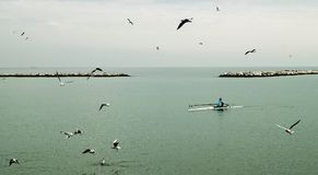 Fisherman Riding Boat in the Middle of Ocean With Flock of Gulls at Daytime royalty free stock images