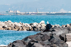 Fisherman on rocks Stock Image