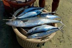 Fisherman's catch Royalty Free Stock Image