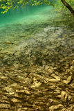 Fisherman's dream- lake full of fish. In croatia Stock Image