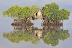 Fisherman's hut among mangroves Stock Photos