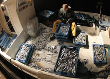 Fisherman selecting captures after fish wide angle shot Royalty Free Stock Photography