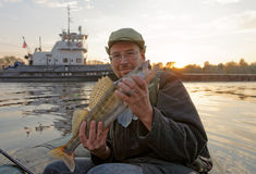 Fisherman is showing a walleye stock photo