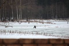 Fisherman sitting on a frozen lake and fishing. cold weather in winter. snow on forest lake. Hobbies active person, rest for the stock image