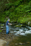 Fisherman in a small trout stream. Royalty Free Stock Photo