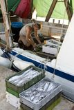 Fisherman sorting out the catch on a deck of a trawler boat. Tribunj, Croatia - August, 24, 2018: Fisherman sorting out the catch on a deck of a moored trawler royalty free stock photography