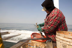 A fisherman sorting out crabs. A fisherman sorting out the crabs Royalty Free Stock Image