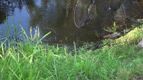 Fisherman throwing fishing basket into pond, 4K stock footage