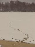Fisherman tracks on the iced river - aged photo Royalty Free Stock Photo