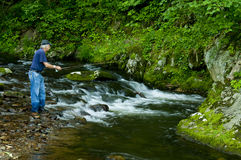 Fisherman trout fishing a small clear stream. Royalty Free Stock Photography