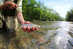 Fisherman with trout in the river Stock Image