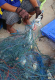 Fisherman unpack crab from trawl Stock Photos