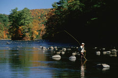 Fisherman in Water. Solitary fly fisherman on Housatonic River in autumn, Connecticut Royalty Free Stock Photos