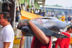 Fisherman are weighing tuna to sell to the market Stock Photography
