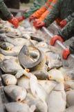 Fisherman at Work/Fishing Industry Royalty Free Stock Image