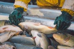 Fisherman at work/fishing industry Royalty Free Stock Photo