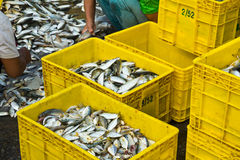 Fisherman worker Stock Image