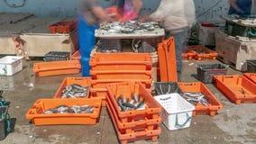 Fisherman worker sorting fish timelapse stock footage