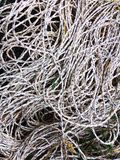 Fisherman& x27; corda del nylon di s Fotografia Stock