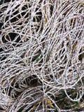 Fishermans nylon rope Stock Photo