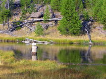 Fisherman in Yellowstone National Park Royalty Free Stock Image