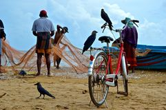 Fishermans. Collecting the daily fish from nets in Negombo, Sri Lanka royalty free stock photo
