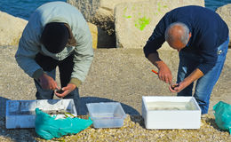 Fishermans en Bari, Italia Cortando a erizos de mar recién pescados para probar la carne cruda Imagenes de archivo