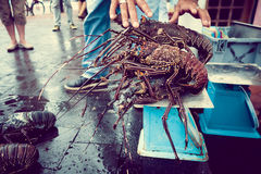 Fishermar holding some fresh lobsters of santa cruz in market seafood photographed in fish market, galapagos, vintage Royalty Free Stock Photos