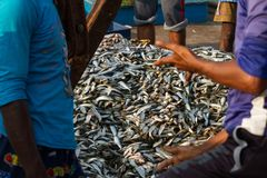 Fishermen agree to sell a large batch of fresh fish. Fishing dock in southern India Royalty Free Stock Image