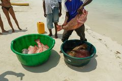 Fishermen on beach divide catch fresh fish red snapper. Fishermen on the beach divide the catch fresh fish red snapper Stock Images