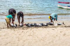Fishermen and big tuna fish on the Tamarin beach Stock Photo