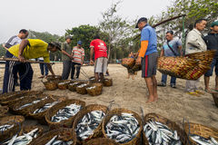 Fishermen bring their catch to shore Stock Photography
