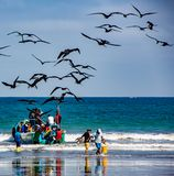 Fishermen carry bins of fish to buyers, chased by birds looking Royalty Free Stock Photography