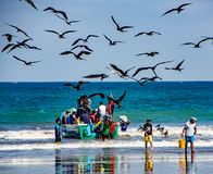 Fishermen carry bins of fish to buyers, chased by birds looking Royalty Free Stock Images