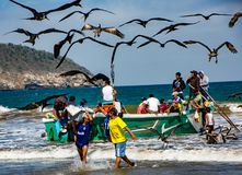 Fishermen carry bins of fish to buyers, chased by birds looking Royalty Free Stock Photo
