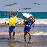 Fishermen carry bins of fish to buyers, chased by birds looking Royalty Free Stock Image
