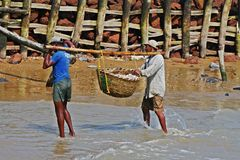 Fishermen carry boxes full of fishes at Digha, India Stock Photo
