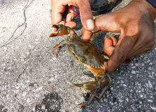 Fishermen catch crab Stock Photos