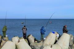 Fishermen catch a sprat in the Baltic Sea Stock Photo