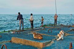 Fishermen and cats. Egyptian fishermen making fishing by rods from breakwater of Eastern harbour in Alexandria city,Egypt Stock Photography