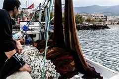 Fishermen Of Cinarcik Town. Of the country Turkey. Yalova city located in Marmara region of the country Turkey. Used to be a small town and hit by the great Royalty Free Stock Photos