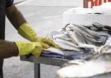 Fishermen cleaning Stock Photos