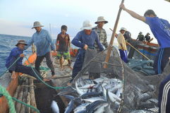 Fishermen are collecting tuna fish caught by trawl nets in the sea of the Nha Trang bay Stock Images
