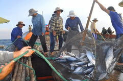 Fishermen are collecting tuna fish caught by trawl nets in the sea of the Nha Trang bay Royalty Free Stock Image