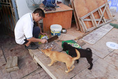 Fishermen cut fish meat to feed the dogs Royalty Free Stock Photos