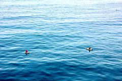 Fishermen are engaged in fishing on improvised floating rafts in the port of Tuticorin, India. royalty free stock photos